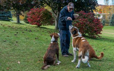 Come addestrare un cane adulto, trovare sintonia anche in età matura