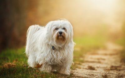 Cane a pelo lungo: come lavarlo e prendersene cura