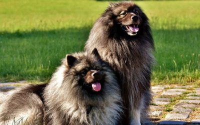 Cane pelo lunghissimo; un folto amore