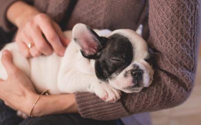 Cucciolo in casa da solo: educarlo ad essere più indipendente e sereno