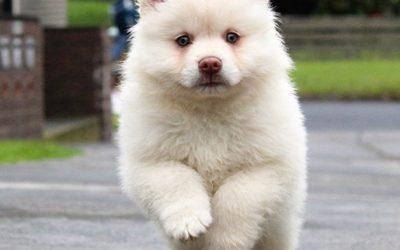 Richiamo per cani: addestramento del cucciolo attraverso i segnali sonori