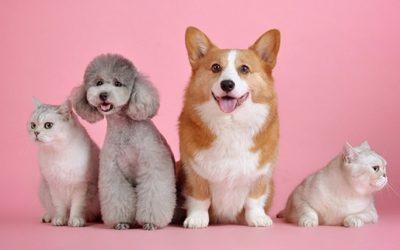 Come riconoscere un cane di razza, anche se l'amore non ha distinzioni