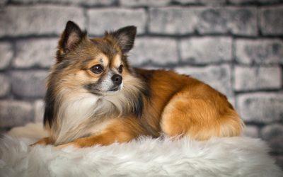 Aspira peli per cani: la soluzione al problema della muta