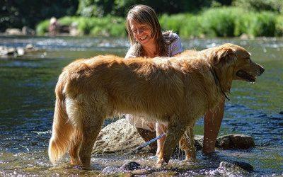 Come tagliare il pelo al cane; serve davvero?