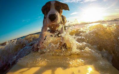 Vacanza con il cane: dove possiamo andare quest'anno?