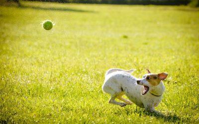 Come educare un cane | video pratici per un'ottima convivenza