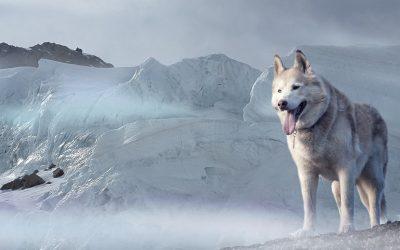I cani soffrono il freddo? scoprilo nel Video